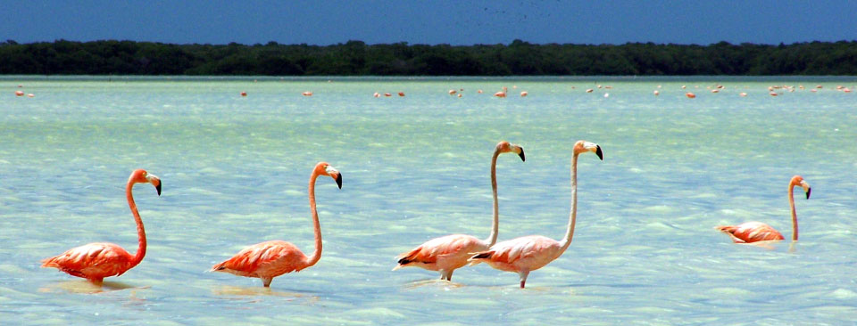 From December to April, its all about pink flamingos in Celestun as this is when the birds flock to the regions protected waters to nest and feed.