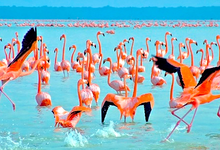 Mingle With The Flamingos In Celestun